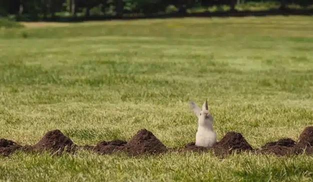 Estos conejos bailarines, la viva estampa de la felicidad en un peculiar spot sueco