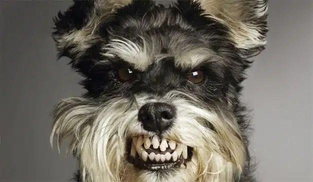 La publicidad online pone de un humor de perros al internauta (que