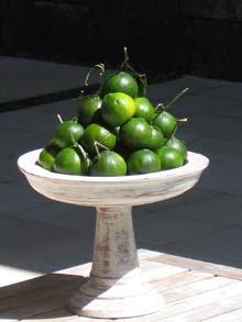 dalandan offering