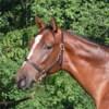 Profile picture of Daniel Guidry