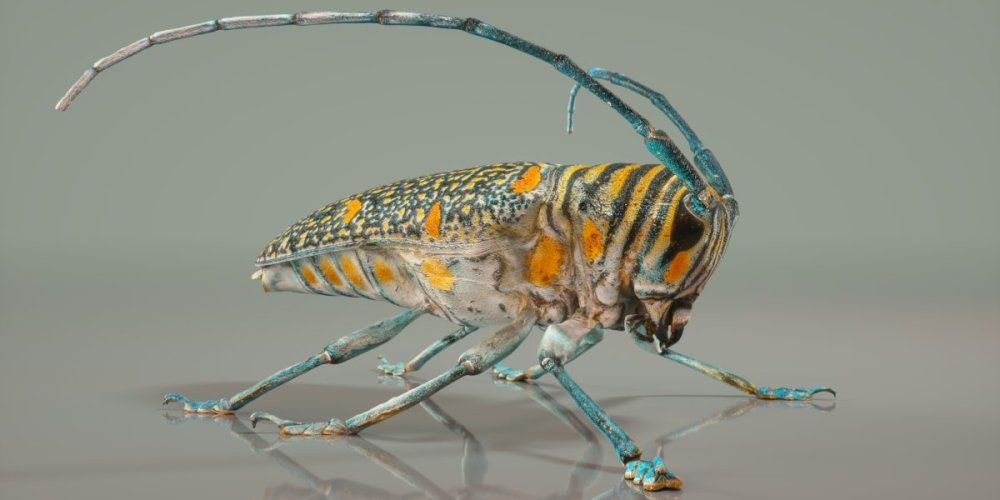 mark-florquin-3d-scanning-scan-photogrammetry-holographer-realistic-3d-Insect