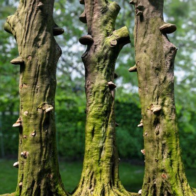 Photorealistic-3D-Scanned-Tree-Nature-Forest-Game-Unreal-Unity-Asset-Bark-Trunk-017
