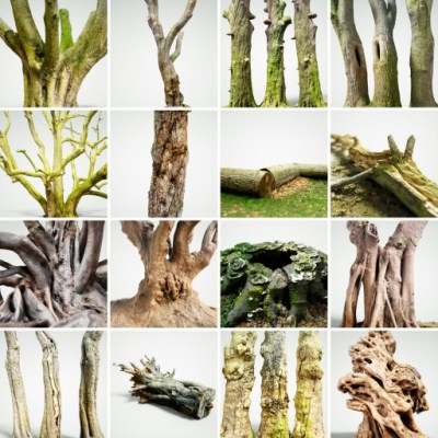 16-Trees-Volume-2-White-1800px