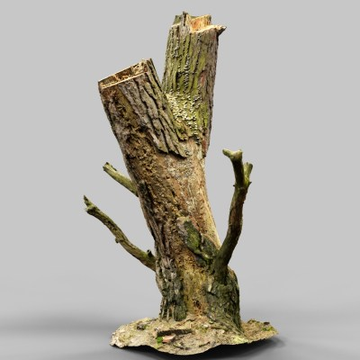 stumpy_a2_tree_bark_environment_art_sample_reference_material_nature_3d_model_scan_photogrammetry