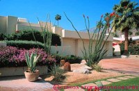 desert garden agave ocotillo Palm Springs California Stock ...