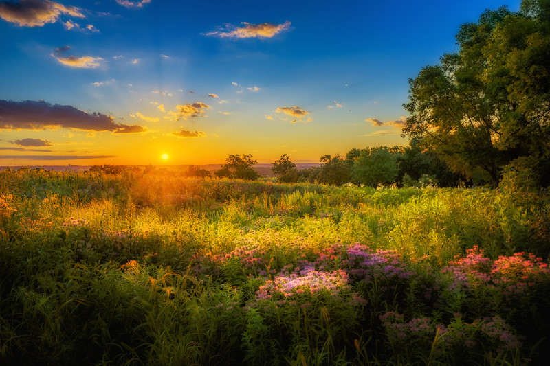 Surreal, HDR, High Dynamic Range, Sunset HDR, Flowers HDR