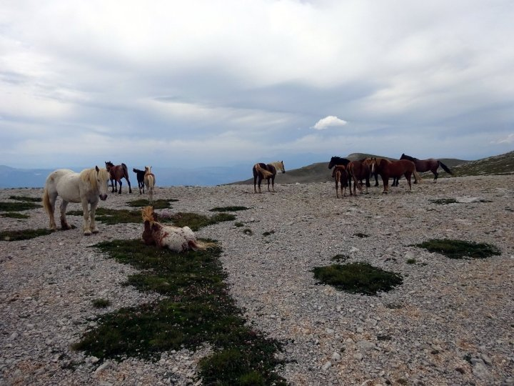 A herd of wild horses looking bored and forlorn on Monte Macellaro