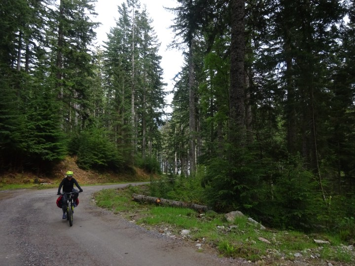 Cycling through forest above Invermoriston on the Great Glen Way