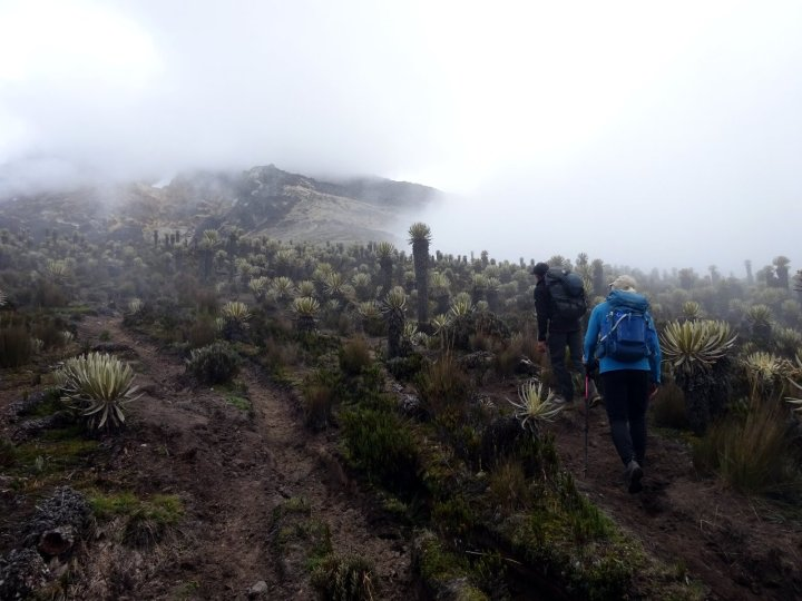 On a muddy trail to high camp, with frailejones all around