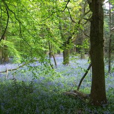 How the sale of England's forests drove me back into politics