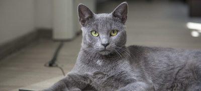 grey-cat-fluffy-feline-kitten-kitty courtesy of Pixabay slider