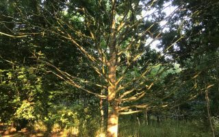 Revisiting the arable parable woods