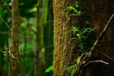 Ferns on a massive tree trunk
