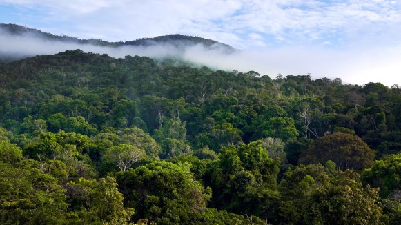 Antsolipa forest, where our research was conducted. Photo by Duncan Parker.