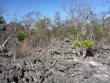 Limestone habitat (Tsingy) of Geckolepis megalepis. Photo by Frank Glaw.