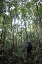 Moving around the forest at 750 m
