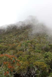 Cloud forest is cloudy