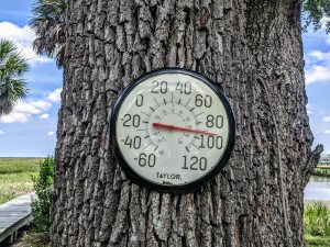 thermometer on a tree