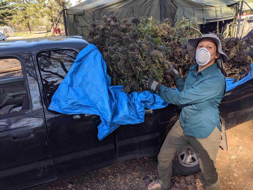 christina next to a truckload of hemp