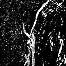 2014-06-06_14_41_43_Imagemagick-Ausgabe