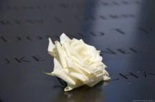 Rose am 9/11 Memorial New York