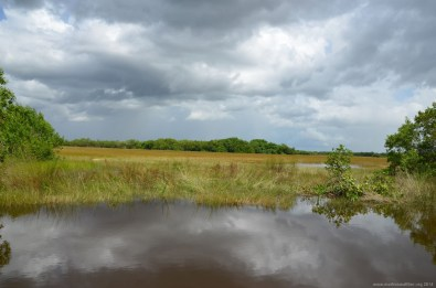 Die Everglades Grasslands