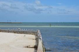 Ausblick für die Möwen von Key West