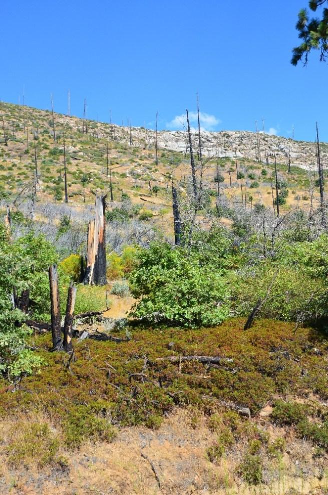 Yosemite Waldbrand-Überreste