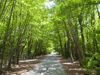 Marmaris Günnücek Mesire Yeri ve Orman Kampı