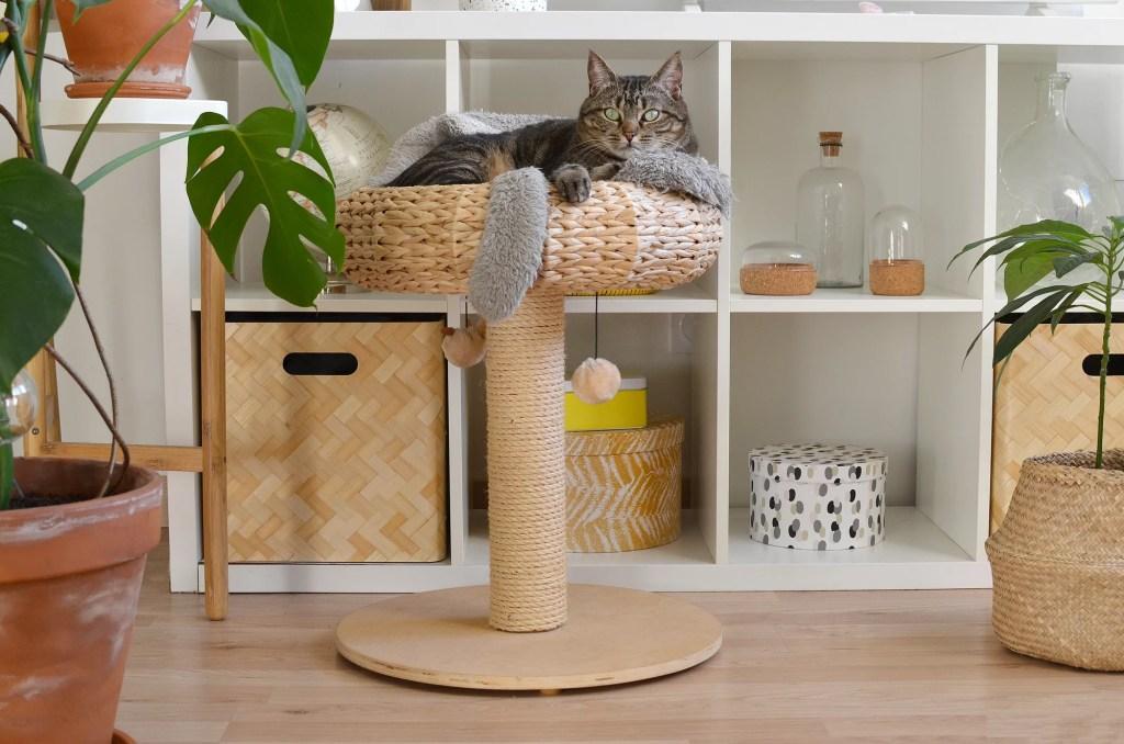 chat appartement panier arbre a chat naturel tikka marmille 1024x678 - Tikka et Papaye, mes essentiels et conseils avec deux chats en appartement