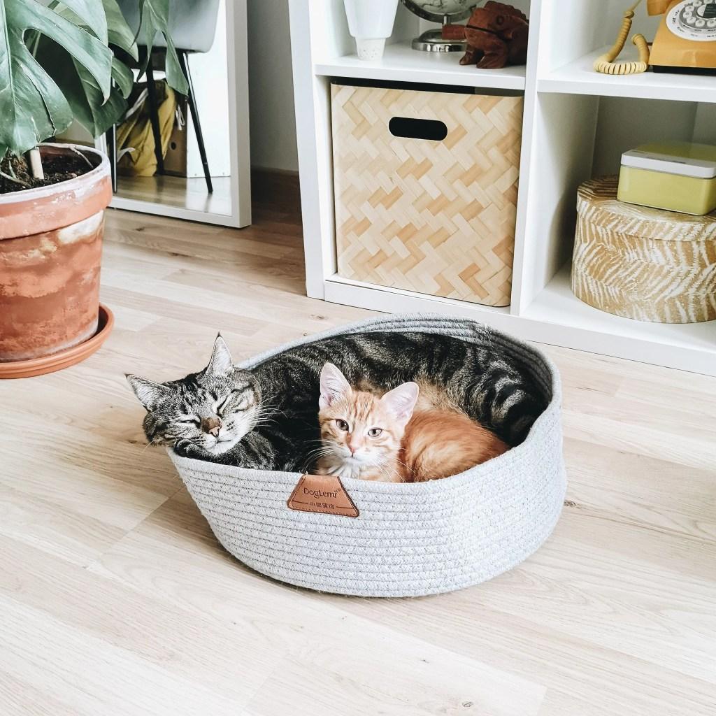 tikka papaye chat marmille 1024x1024 - Tikka et Papaye, mes essentiels et conseils avec deux chats en appartement