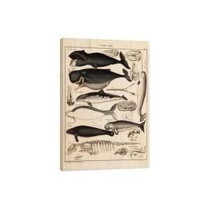 """posterlounge tabealu bois baleine 300x300 - Ma sélection déco """"green"""" pour passer un bel automne dans son intérieur"""