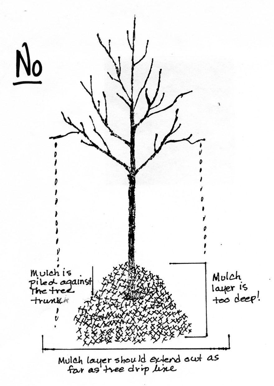 Shredded Tree Mulch