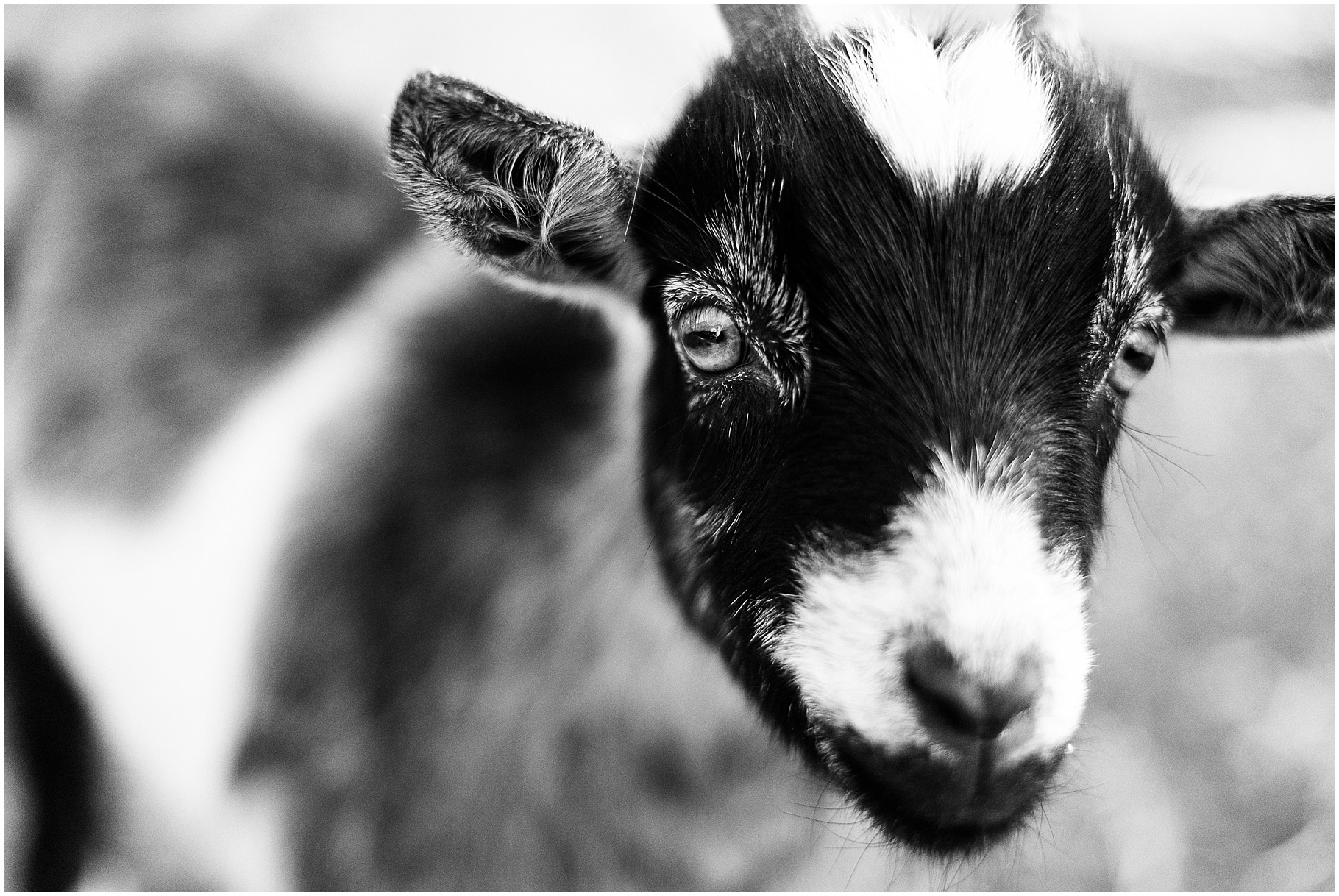 goat farm tallahassee | workamping goat house farm