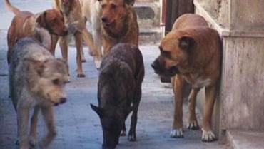 Donna aggredita da un gruppo di cani randagi a Partanna