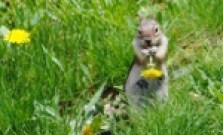 A photo of a squirrel that Marsha took.