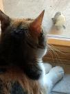 The cat Skittles looking a an outdoor bird.