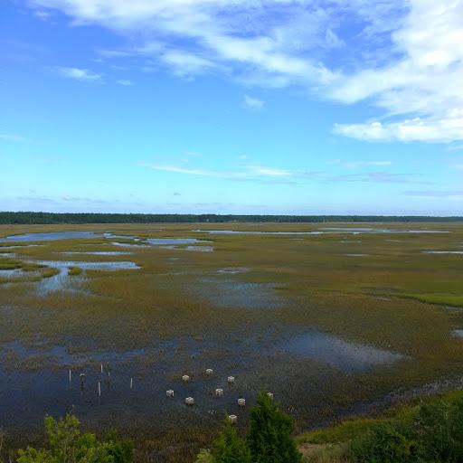 Rebecca's marsh site, flooded