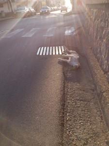 cane-morto-in-strada