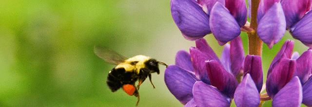 pszczoła kwiat miód