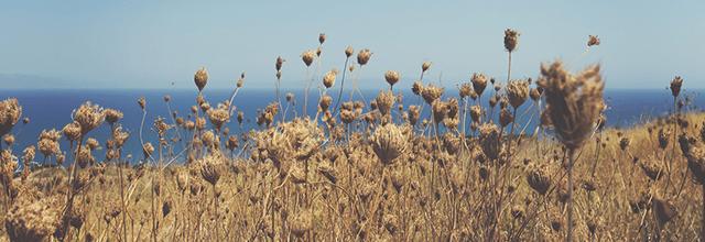 pole widok krajobraz pola zboże trawa niebo błękitne humor nastrój