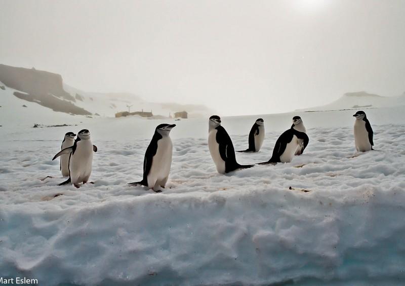 Dobrodružství jachty Bona Terra – Argentina, Chile, Antarktida [Mart Eslem]