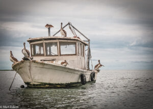 Člun s pelikány, Livingstone, La Buga, Guatemala (Mart Eslem)