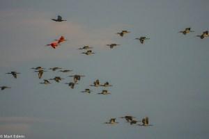 Ptáci v letu nad Los Llanos (Mart Eslem)