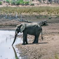 Slon u napajedla, JAR [Mart Eslem]