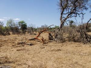 Krajina zničená slony, JAR [Mart Eslem]