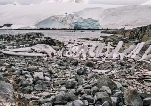 Vzpomínky na velrybí kostru(Mart Eslem)