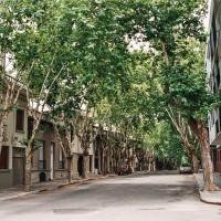 Příjemný chládek ve stínu platanů – Montevideo, Uruguay [Mart Eslem]