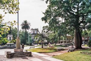 Lahvový strom na Plaza 25 de Mayo – Concordia, Argentina [Mart Eslem]