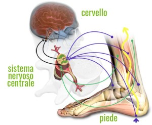 Effetti benefici del judo sul sistema dell'equilibrio (Rubrica Medico Sportiva)